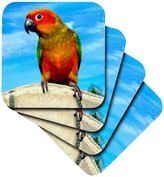 3dRose Sun Conure - Ceramic Tile Coasters, Set of 4 (cst_1011_3)