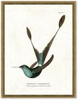 One Kings Lane Framed Hummingbird Print II