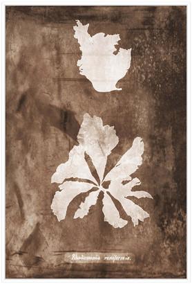 Jonathan Bass Studio Natural Forms Sepia 9, Decorative Framed Hand Embe