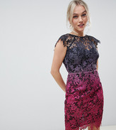 Paper Dolls Petite midi lace dress with scalloped back in ombre metallic lace