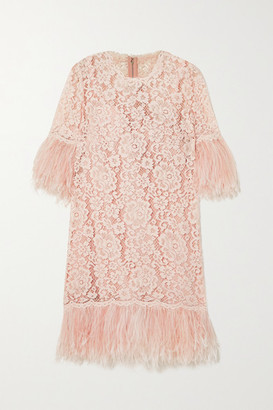 Dolce & Gabbana Feather-trimmed Cotton-blend Guipure Lace Mini Dress - Pink