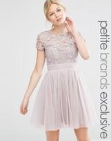 Little Mistress Petite Short Sleeve Lace Bodice Mini Dress With Tulle Skirt