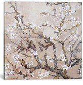 iCanvas 'Almond Branches - Vincent Van Gogh' Giclee Print Canvas Art