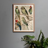 Graham and Green Framed Small Parrots Print