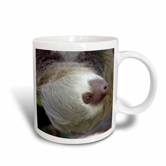 3drose 3dRose Costa Rica, Hoffmans Two-Toed Sloth wildlife - SA22 KWI0003 - Kymri Wilt - Ceramic Mug, 15-ounce