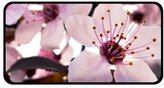 """Flower License Plate Beautiful Japanese Cherry Blossoms Metal Tag License Plate - 11.8"""" X 6.1"""""""