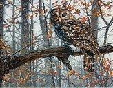 "Dimensions Wise Owl"" Counted Cross Stitch Kit, Multi-Colour"
