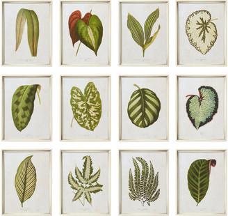 OKA Set of Twelve Exotic Leaf Framed Prints - Green