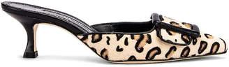 Manolo Blahnik Maysale 50 Heel in Leopard   FWRD