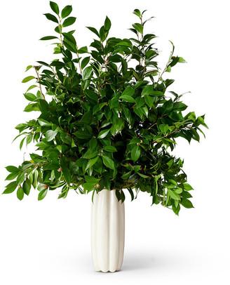 AERIN Mirabelle Tall Vase - Cream