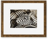 Williams-Sonoma Safari Animals with Burled Wood Frame, Zebra