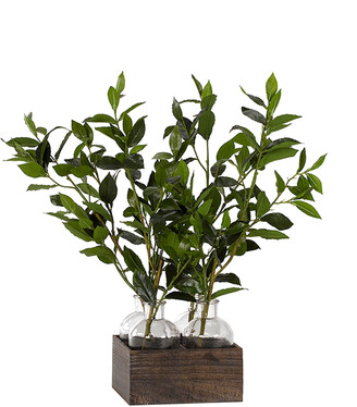 D&W Silks Bay Leaf Branches In Glass Jars In Wooden Crate
