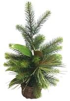 Threshold Lit Pine with Magnolia Leaf Tree in Basket (19