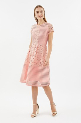 Coast Stripe Bodice Lace Panelled Dress