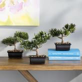Nearly Natural Silk Bonsai Desk Top Plant in Planter
