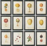 OKA Anatomical Fruit Framed Prints, Set of 12