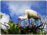 MSD Natural Rubber Placemat IMAGE ID: 29408489 African Spoonbill in Casamance Senegal Africa