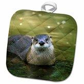 3dRose Danita Delimont - Wildlife - Peru, Manu River Region. Giant River Otter wildlife - SA17 GJE0120 - Gavriel Jecan - 8x8 Potholder (phl_86995_1)