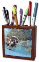 3dRose ph_7863_1 Under Water Turtle-Tile Pen Holder, 5-Inch
