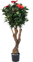 Asstd National Brand 4' Potted Hibiscus Tree
