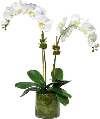 Diane James Phalaenopsis Orchid in Glass Cylinder