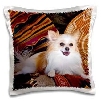 3drose 3dRose USA, California. Pomeranian lying on Southwestern blankets., Pillow Case, 16 by 16-inch
