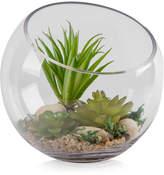 Home Essentials Terrarium Kit