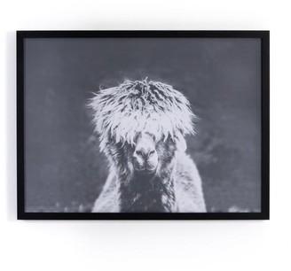 west elm Framed Print - Llama Bad Hair Day