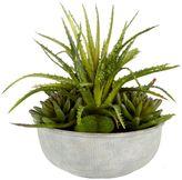 Junipa Spikey succulent in grey ceramic vase