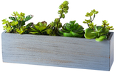 Torre & Tagus Large Solaro Rectangular Potted Cluster Succulent
