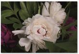 """Trademark Fine Art Brookview Studio 'Peonies I' Canvas Art, 16"""" x 24"""""""