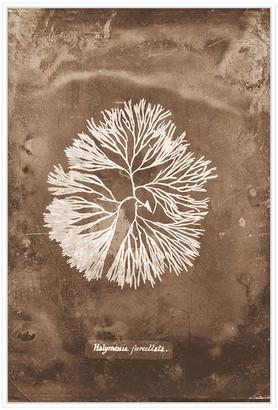 Jonathan Bass Studio Natural Forms Sepia 6, Decorative Framed Hand Embellished Canvas