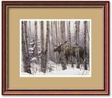"Amanti art ""A Walk in the Woods"" Framed Wall Art"