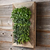 Williams-Sonoma Reclaimed Wood Wall Planter
