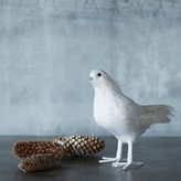 Graham and Green White Feather Dove