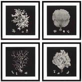 Eichholtz Ec191 Black & Tan Corals Prints Set Of 4