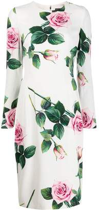 Dolce & Gabbana rose print fitted dress
