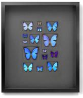 Cerulean Butterflies (Shadow Box Frame)
