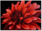 "Dahlia Trademark Global 'Red Dahlia' Canvas Print by Kurt Shaffer, 18"" x 24"""