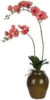 SIA Coral Phalaenopsis Orchid in Vase