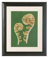 Fiddlehead Fern Art