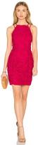 Greylin Yasmine Lace Dress