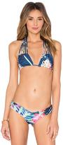 Stone Fox Swim Natasha Bikini Top