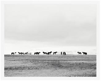 Pottery Barn Icelandic Horses No. 2 by Jennifer Meyers
