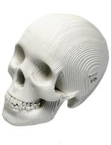 DaVinci Micro Cardboard Skull