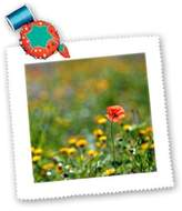 3dRose LLC qs_107672_1 Nano Calvo Ibiza - Red field poppies in the fields of San Carlos, Ibiza - Quilt Squares