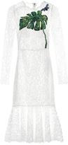 Dolce & Gabbana Cordonetto-lace embellished dress