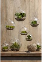 Rogue Sphere Hanging Planter (Set of 6)