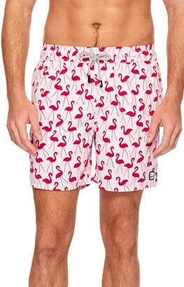 Trunks Tom & Teddy Flamingo Print Swim