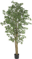 Asstd National Brand 6' Japanese Maple Silk Tree